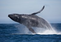 Whales Gold Coast Tours